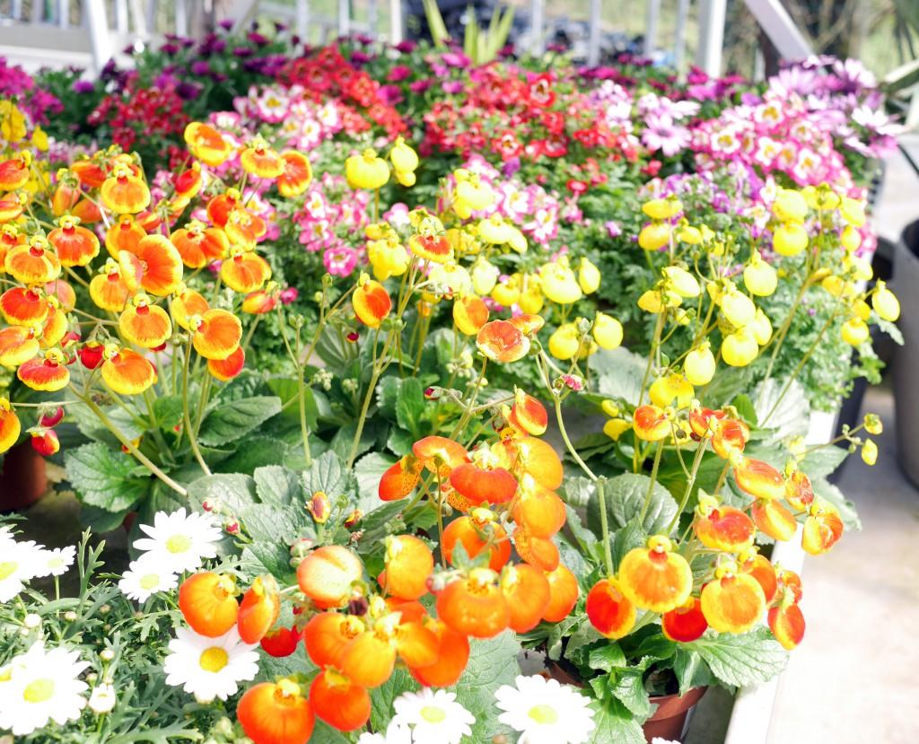 fleurs_vianden
