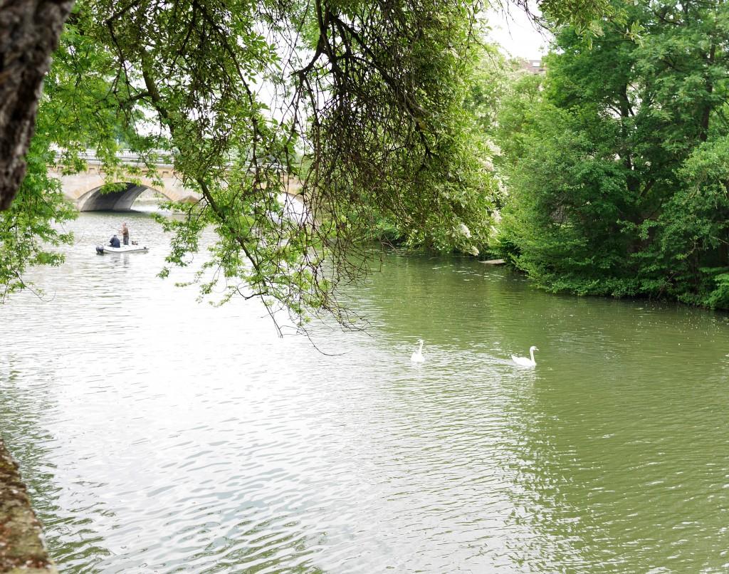 swans_metz